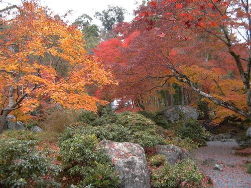 秋です(^。^)y-.